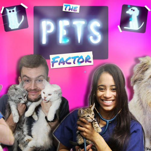 The Pets Factor